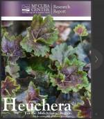 Heuchera_Mt_Cuba