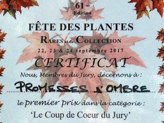 Coup de Cœur du Jury